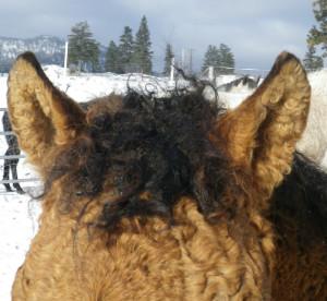 Sunny ears